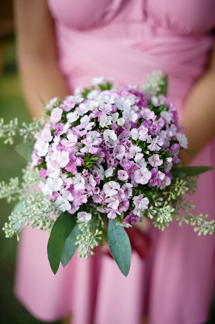 1000+ Images About Sweet William (Dianthus) Wedding