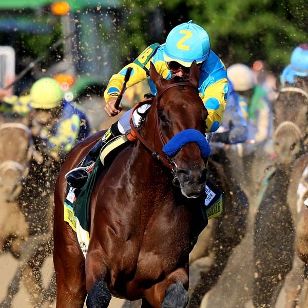 American Pharoah Wins 141st Kentucky Derby 2015.  American Pharoah Wins the Triple Crown! A feat that has not been done, since Affirm won it 37 years ago,in 1978!
