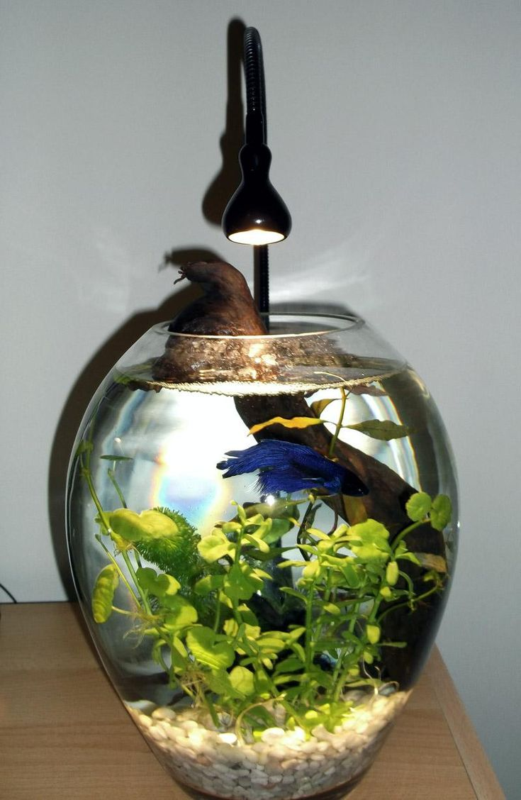 Creative betta fish bowl ideas for Beta fish bowl