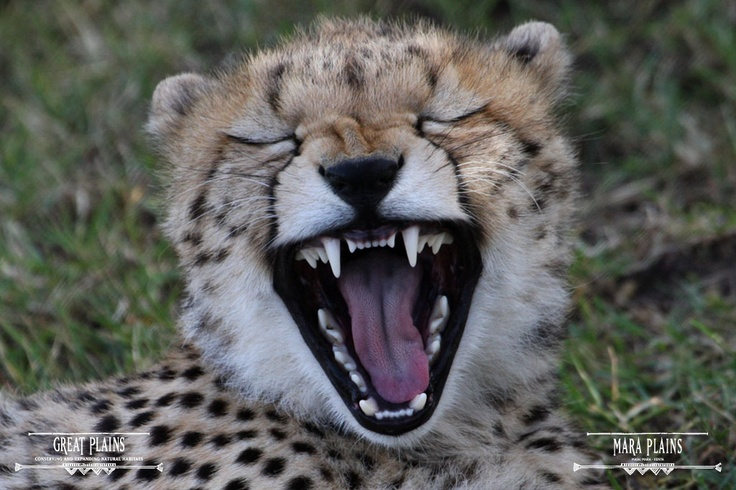 There is always a reason to smile or have a laugh at | Mara Plains