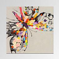 Animal+/+Célèbre+/+Patriotique+/+Moderne+/+Romant...+–+EUR+€+55.85