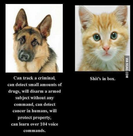 The differences between cat and dog