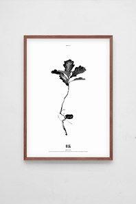Grow Oak, fin grafisk affisch från Dry Things. Printad på obestruket papper. Fin att rama in eller sätta upp med klämmor. Ram ingår ej.