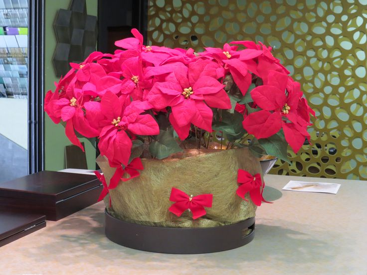 Fake pretty poinsettias so the cats don't get them..
