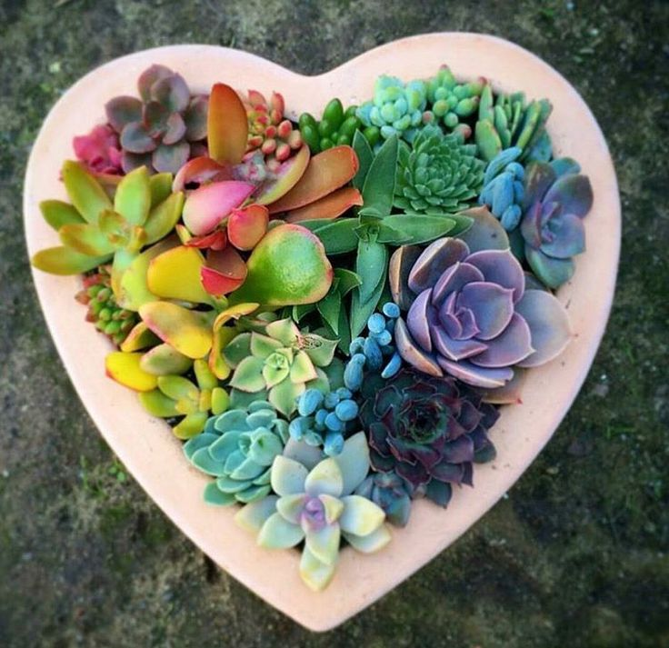 Succulents. Rainbow. Lightandlotus