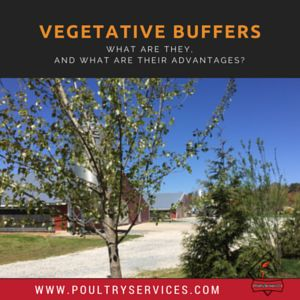 Vegetative Buffers - What Are They, And What Are Their Advantages? - http://www.poultryservices.com/blog/vegetative-buffers-what-are-they-and-what-are-their-advantages