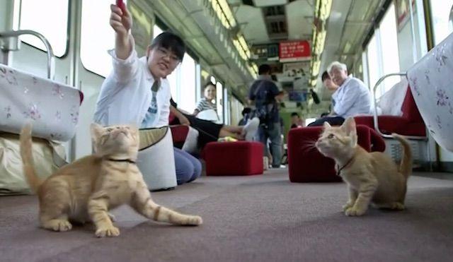 Tchu tchuu! Todos a bordo do primeiro trem de gatos do mundo! Este vagão da Yoro Railway Co Ltd em Ogaki, Japão, acolheu mais de 30 gatos do Santuário do 'Kitten Café' no último fim de semana, como um meio de conscientização para a adoção de gatinhos. Alguns dos passageiros do trem chegaram a se aconchegar com alguns dos gatinhos, enquanto outros observavam de seus assentos ou brincavam com eles no chão. De acordo com a organização, os cães são os animais de estimação mais populares no…