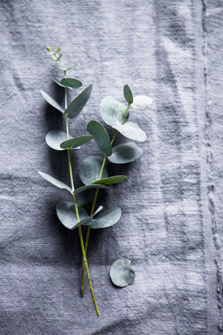 Eukalyptus Als Weihnachtliche Dekoration.