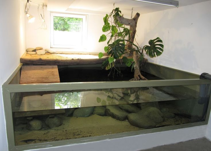 dwarf caiman enclosure | ... enclosure aspx here is another stunning but adequate caiman enclosure