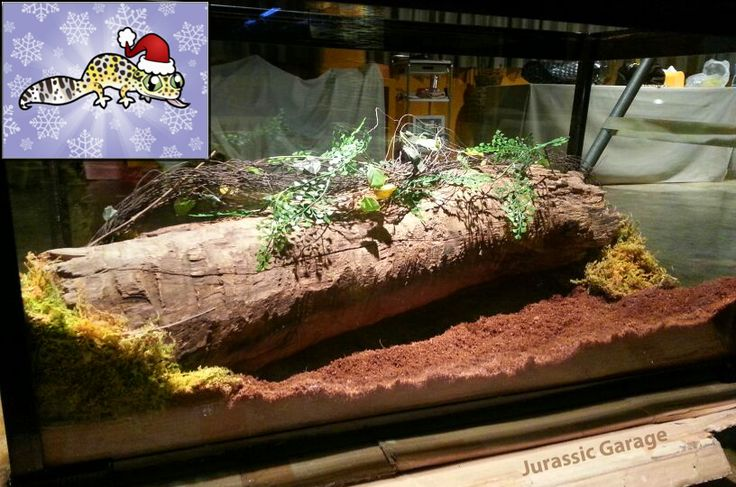 Pin By Branna Riding On Home Pets Vivarium Reptile
