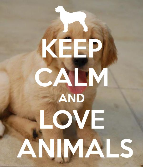 Love Animal Quotes: Keep-calm-and-love-animals