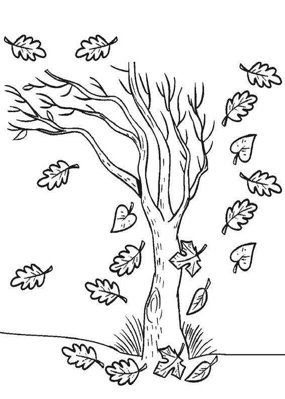 12 Disegni Di Alberi Autunnali Da Colorare Autunno Tree Coloring