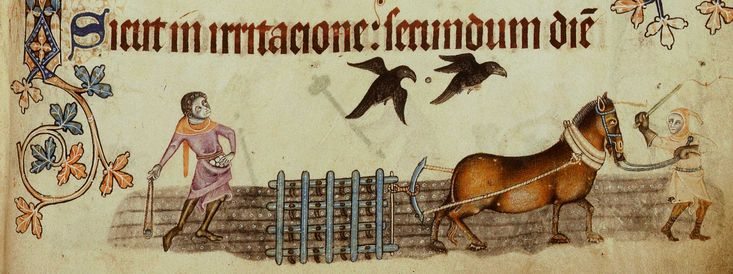 This picture is from the Luttrell Psalter, one of the most famous medieval manuscripts because of its rich illustrations of everyday rural l...