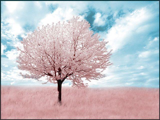 Best 25+ Infrared Photography Ideas On Pinterest