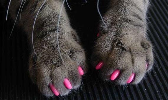Nail Art per cani e gatti