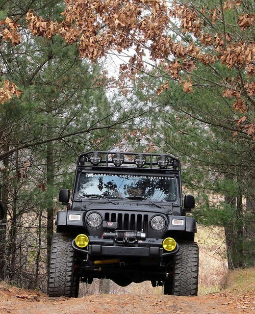 Very cool shot of AEV Wrangler. I would love the matte black.