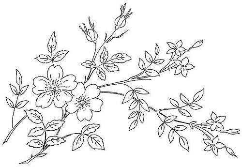 Briggs' Floral Embroidery Designs wild-rose jessamine | Flickr - Photo Sharing!