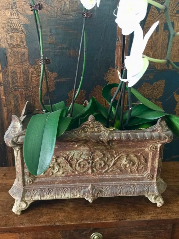 Antique French cast iron planter with lovely patination - European Antiques