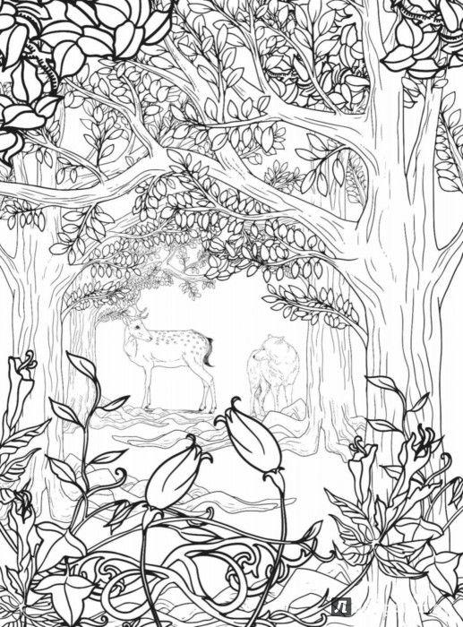 Иллюстрация 13 из 25 для Заколдованный лес. Раскраска-антистресс для творчества и вдохновения   Лабиринт - книги. Источник: Лабиринт