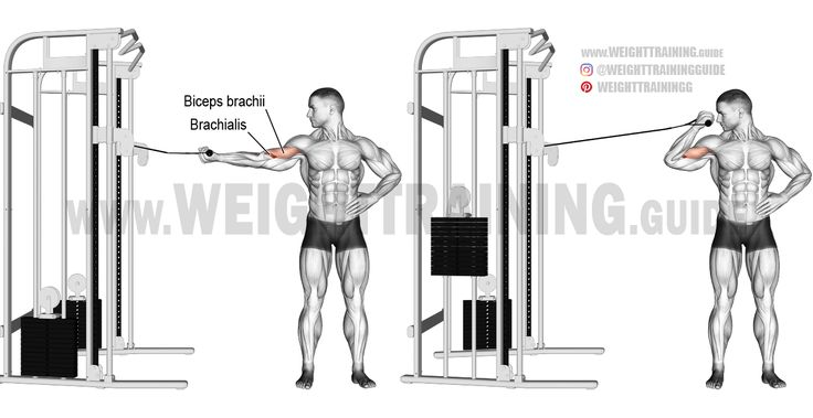 the 25  best bicep curl machine ideas on pinterest