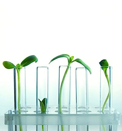 Skincare | New Plant Stem Cell Technology Can Make Antioxidant Ingredients In Skincare Products More Effective.......Advances in plant stem cell technology provide a new way to extract antioxidants from plants in their purest and most stable form, which can help products more successfully treat the signs of aging....... Kur <3 <3