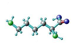 Lysin Aminosäure Wirkung & Vorkommen - Gesund24h