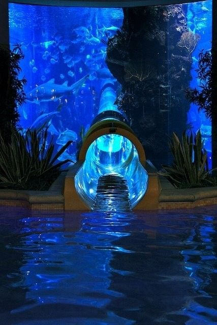 Water slide! how cool would this be if this was in your house and lead to your pool once you slid down it?! The slide also goes through an aquarium! Too cool!