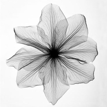 X-Ray flower art