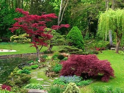55 best japanese maples landscaping images on pinterest for Garden design with japanese maple