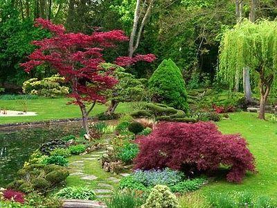 Best 25 japanese maple garden ideas on pinterest for Most beautiful garden trees