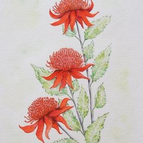 'Waratah' from Judy LaMonde's private collection of botanical works captures some of the magnificent species found in the Australian bush. Original on paper and copyright for sale. See more of her work at www.artinvesta.com/artist/32