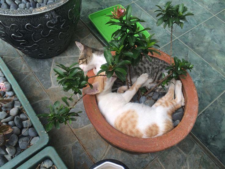 Sleeping position 3