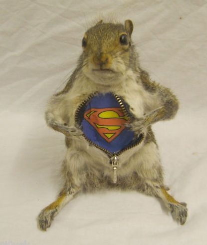 """the expression of """"wait, you telling me theres not guts in here but a superman t-shirt I ate out of a trash can yesterday?!"""""""