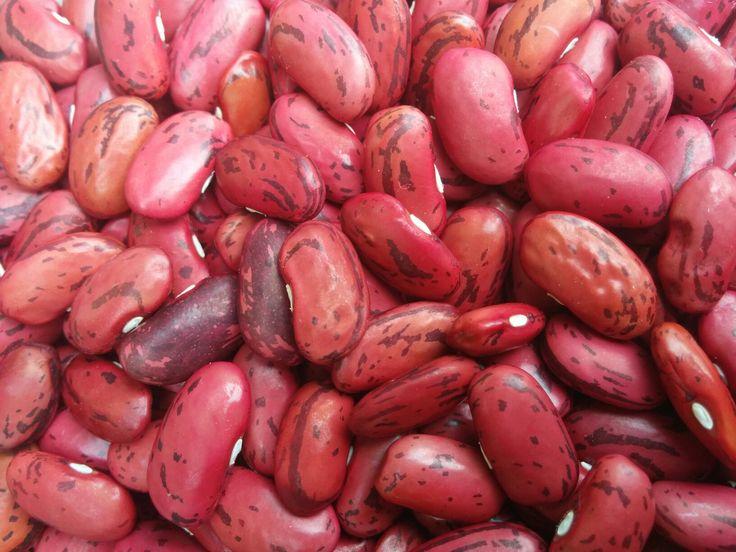 Fagiolo rosso di Lucca - Slow food Autoproduzione 2016