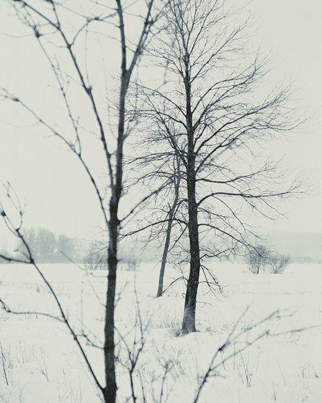 nos arbres
