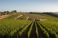 #Tuscanycook #vineyard #winetasting come to visit us www.tuscanycook.com