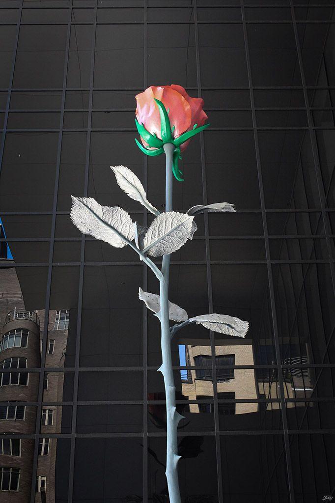 Rose in MoMa, Nyc. Floral sculpture, modern art. Jpog