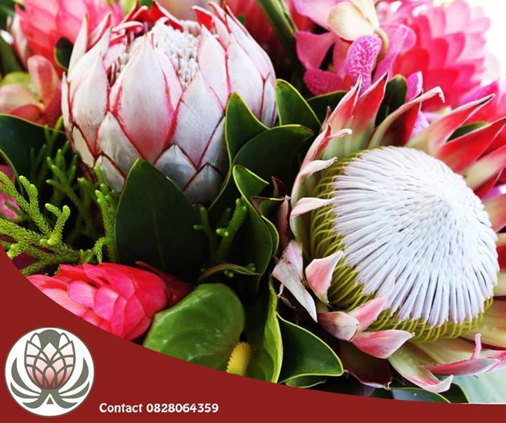 Do you enjoy having proteas in and around your #home? Here are a few things you should know about these #flowers, http://apost.link/2X0. #homeimprovement