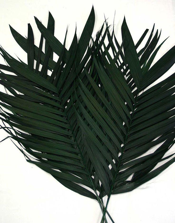 25 Stück Arekapalmwedel 90cm echte Palmwedel Palmenwedel Echtblattwedel