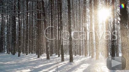 Winter forest HD Stock Footage Clip. Long shot. 2013-01-15.