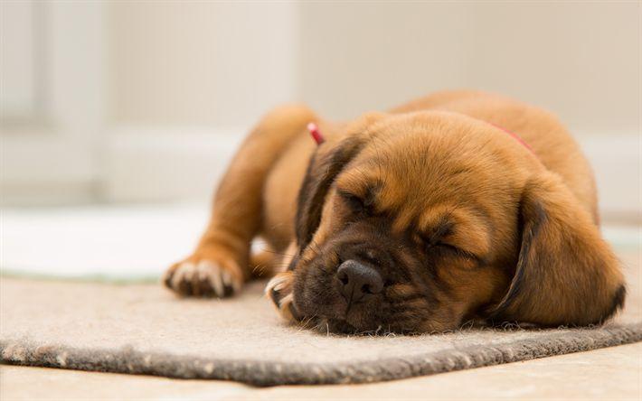 Download wallpapers bulldog, 4k, sleep dog, puppy, pets, dogs, cute animals, small bulldog, cute dog