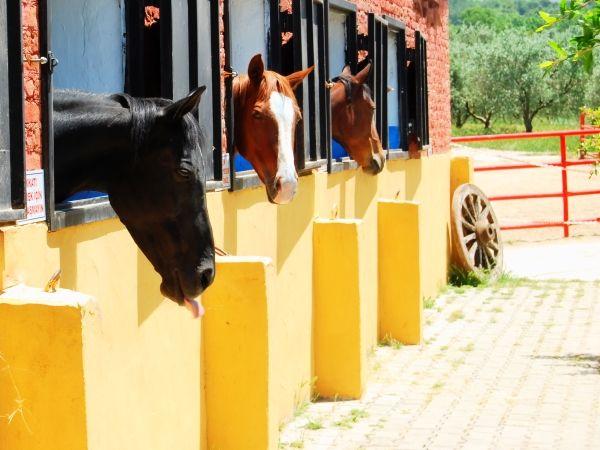 Degirmen horse ranch -  Turkey