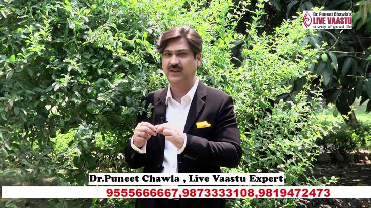 Vastu – अपने घर में कौन सा पौधा लगाएं, Plants also play an important role in suffusing the house with positive or negative energies. Take a look around and see what plants you have grown and are they really Vaastu approved? Certain trees or plants grown in specified corners of the house as prescribed by Vaastu will definitely empower you with favorable results.  Contact us :- 9899777806 | 9873333108 Visit :- www.livevaastu.com Email :- Contact@livevaastu.com