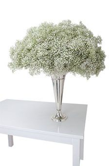 The best deal in town: Baby's breath!