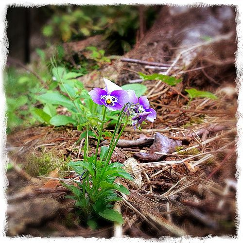 Wild flower August in the garden