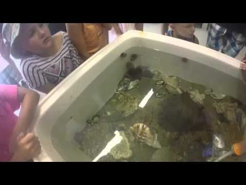 Rm 9 visits an aquarium