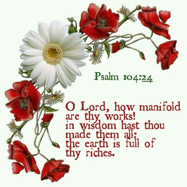 Psalm 104:24 KJV O Lord , how manifold are thy works! in wisdom hast thou made them all: the earth is full of thy riches.