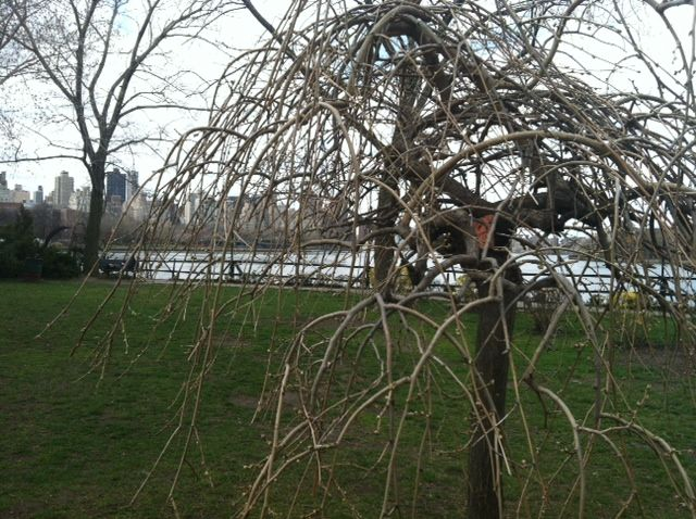 Indalo at Socrates Sculpture Park, Queens, New York