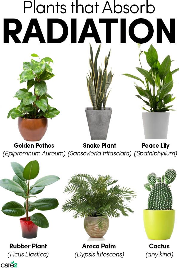 6 Plants That Might Absorb Radiation Care2 Healthy Living Air Purifying House Plants Plants Plant Decor Indoor