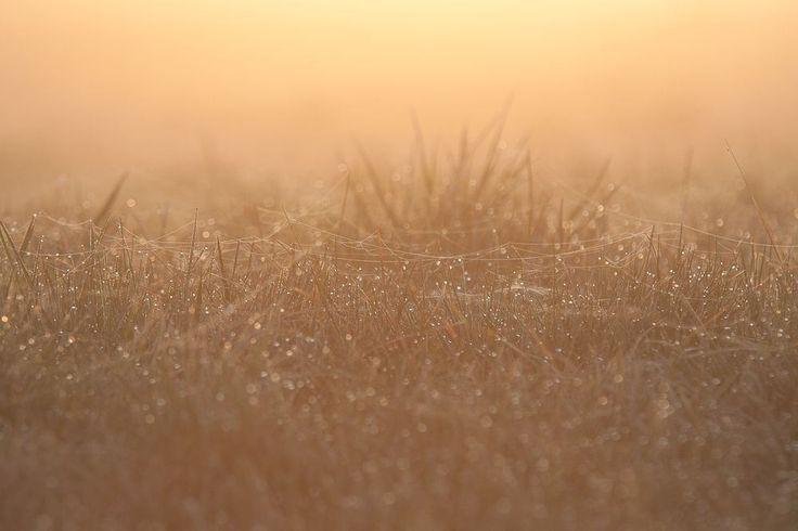 pajęczynki na łące o wschodzie słońca